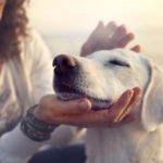 The-Benefits-of-Protection-Dogs-For-Your-Kids