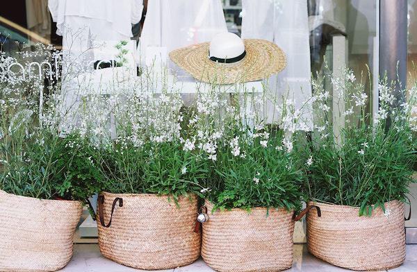 plants-gardening