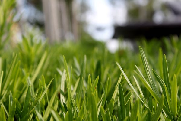 Yard-Maintenance-How-to-Prepare-Your-Garden-and-Lawn-for-Winter