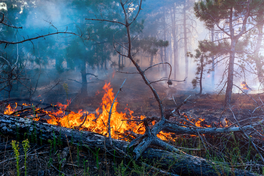 The-Impact-of-Forest-Fires-on-Air-Pollution-acw-anne-cohen-writes